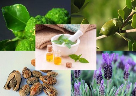 Types of oils for preventing acne scars